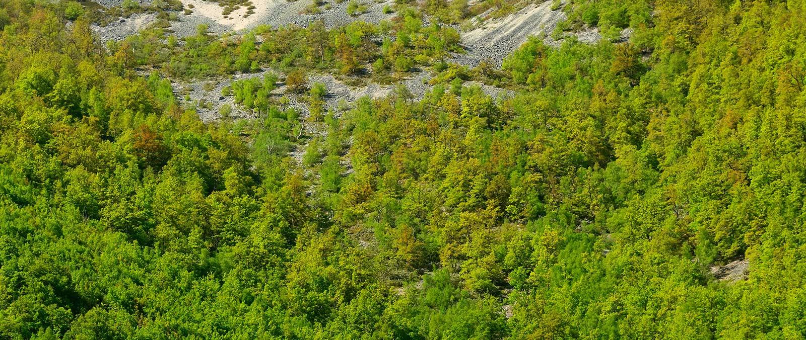 Miel de Bosque - Ería de Valles
